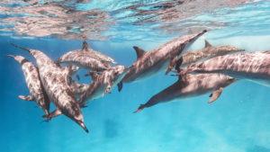 Schule Spinner Delfine