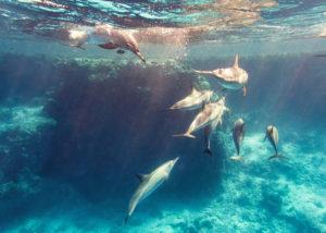 Schwimmen mit Delfinen bei Marsa Alam