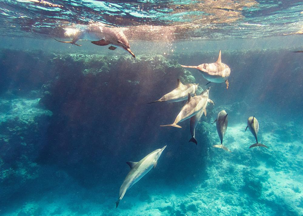Spinnerdelfine im Riff