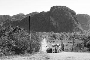 landestypischer Ochsenkarren in Kuba