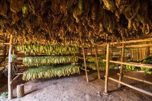 Takabscheune im Viñales in Kuba