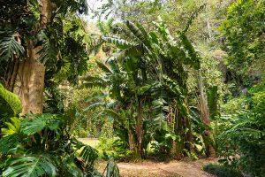 Vegetation rund um die Cueva del Indio