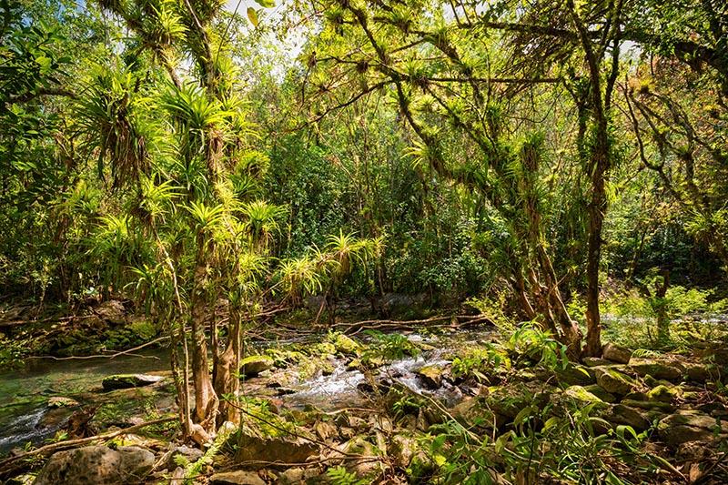 Aufsitzerpflanzen im El Nicho Nationalpark