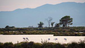Flamingos im Parc Natural del Delta de l'Ebre