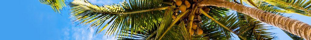 Firefox Theme - Sommer in der Karibik - Sonne und Palmen