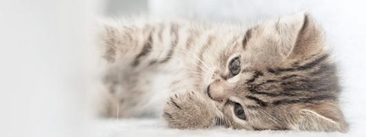 Firefox Theme - Kleines Kätzchen